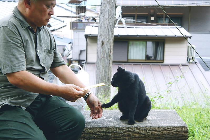日本的老爺爺與貓,「哲學之道」