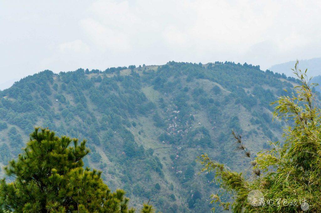 鹿林山遠眺玉山群峰