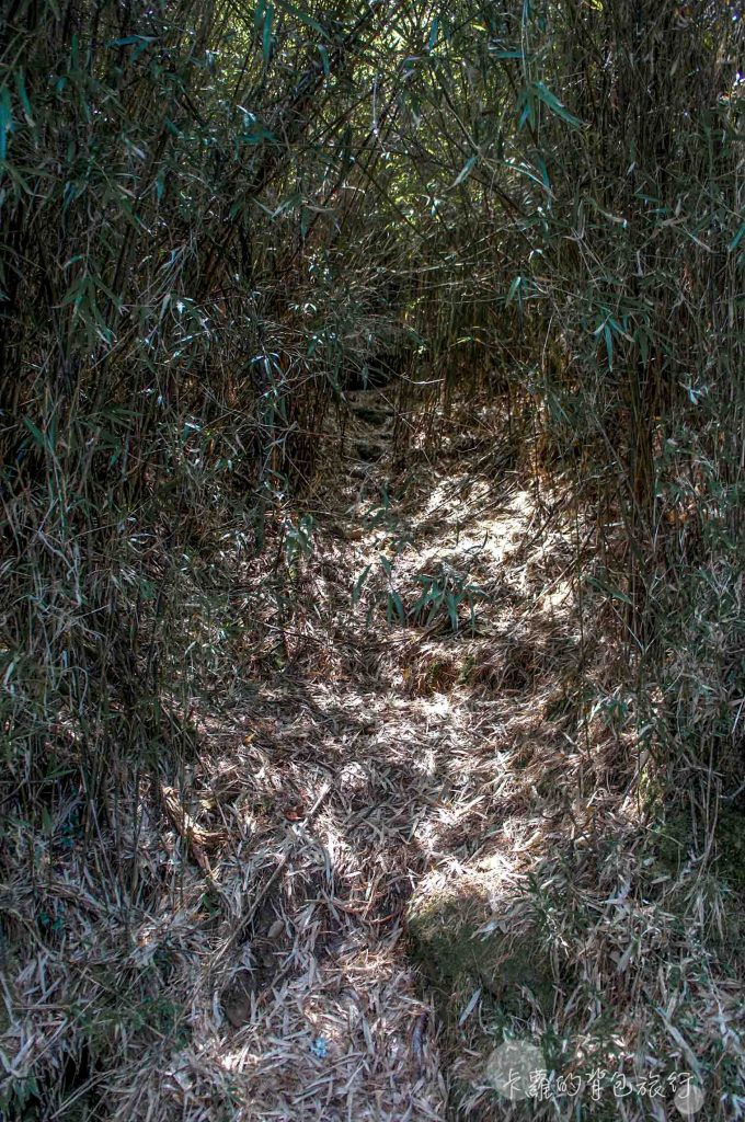 鹿林山-獸徑
