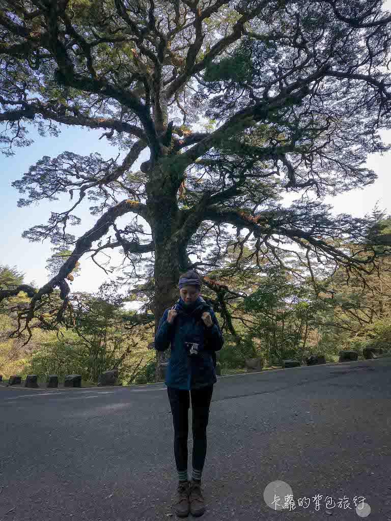 鹿林山 大鐵杉