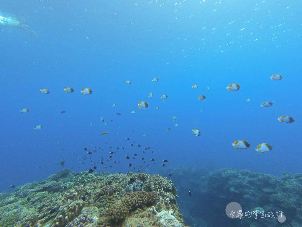 卡蘿的背包旅行-蘭嶼海底世界