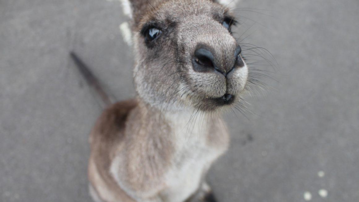 我將部分的愛,遺留澳洲